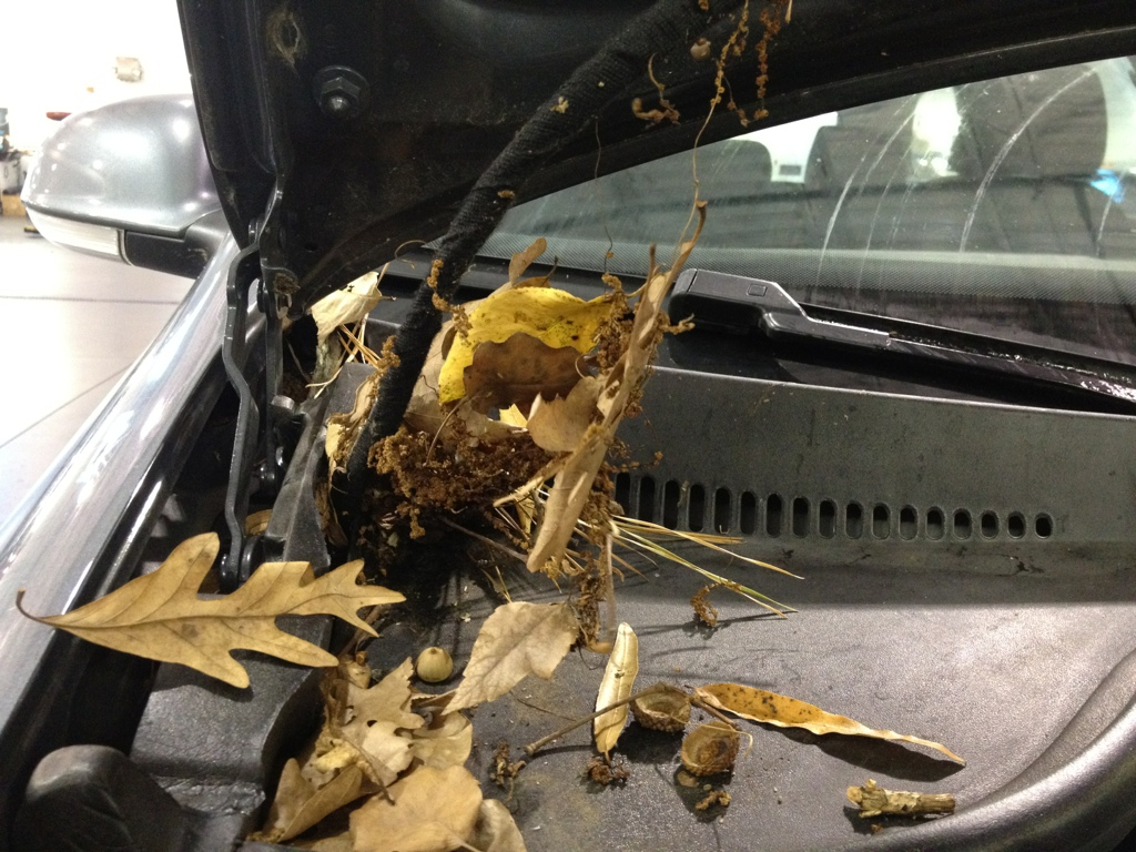 Leaves on a VW that cause a water leak